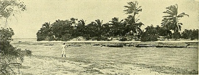 """Image from page 389 of """"The coral reefs of the tropical Pacific"""" (1903)"""