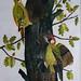 Green Woodpecker by Marjorie Hart by J Allan-1
