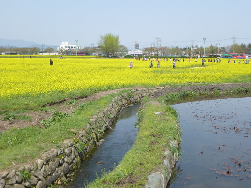 Co-Gyeongju-Parc Wolseong (3)