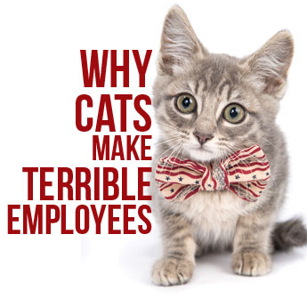Cats Make Terrible Employees