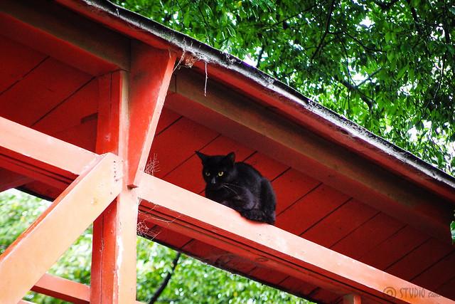 Today's Cat@2015-09-26