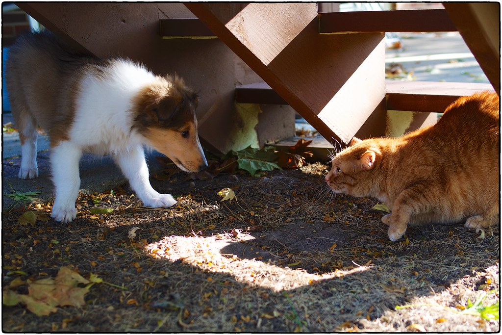 Amelia And Jemma, November 12, 2015