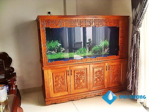 Bể cá rồng a.Hưng Bình Định
