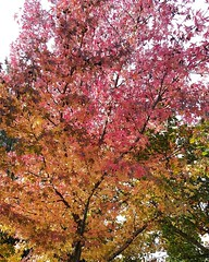 I would rather enjoy the beautiful colors of fall than being stuck inside of a gym #notgivingup  #healthyliving