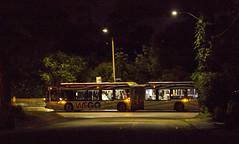 Night Time Tourists