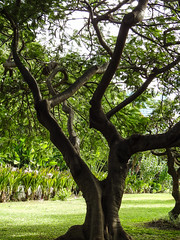 Hawaiian Flowers & Trees (6)