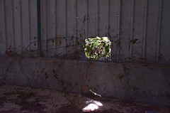 Window on a world