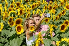 Sunflower Field Selfie 2