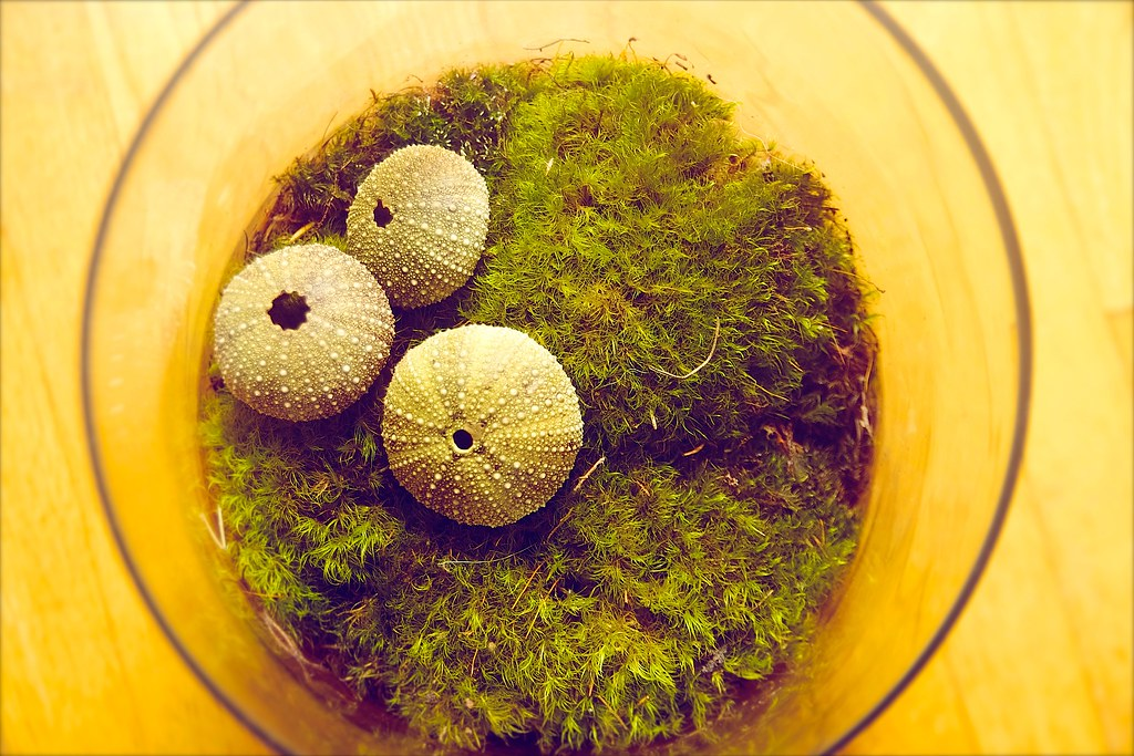 269/365. making more mossariums! I.