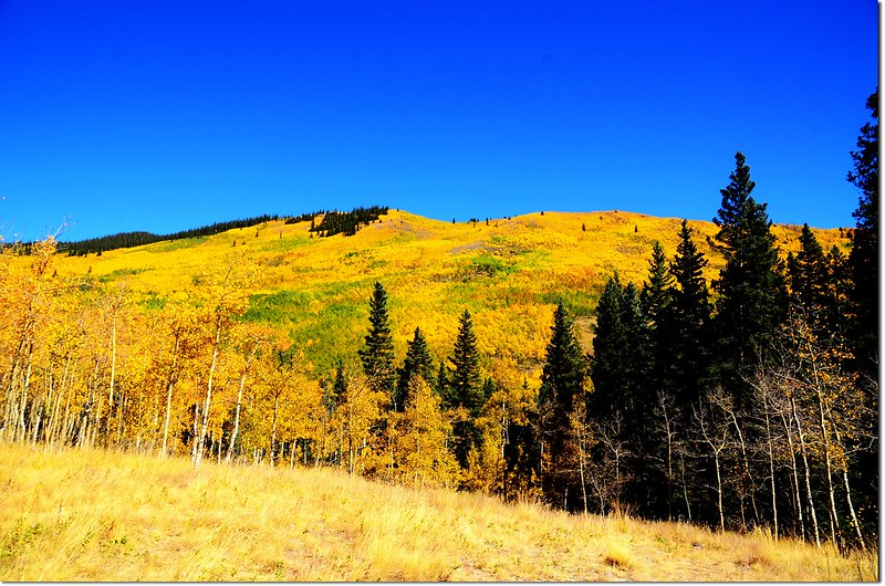 Fall colors at Kenosha Pass, Colorado (38)