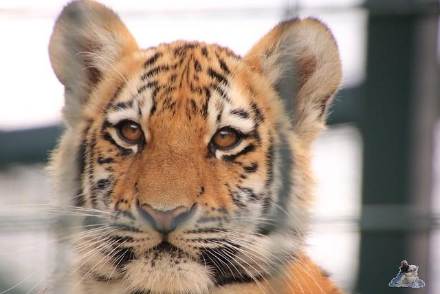 Tierpark Berlin 20.09.2015  0138