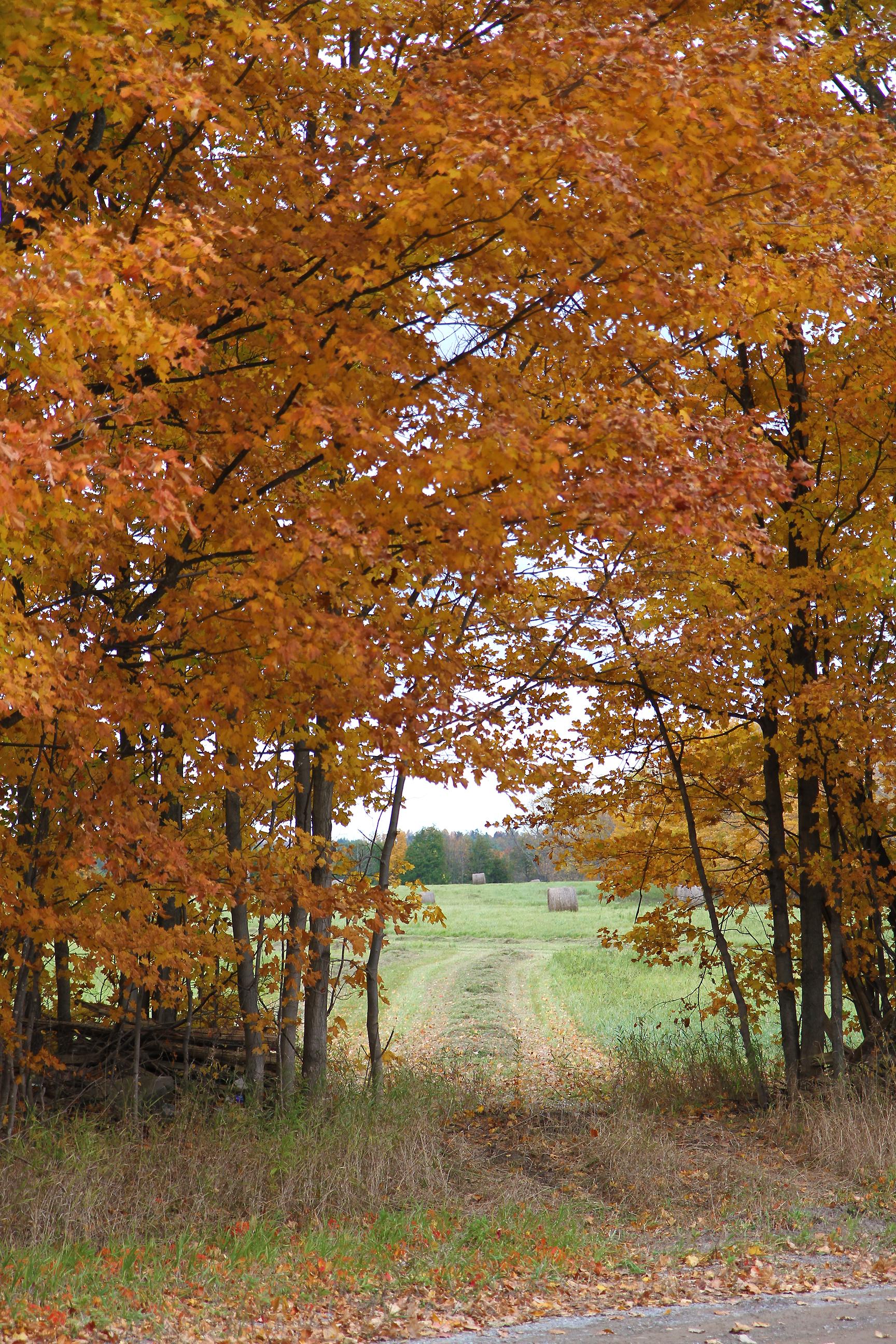 Autumn drive55