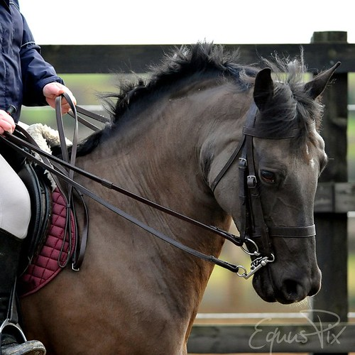 Missy Double Bridle