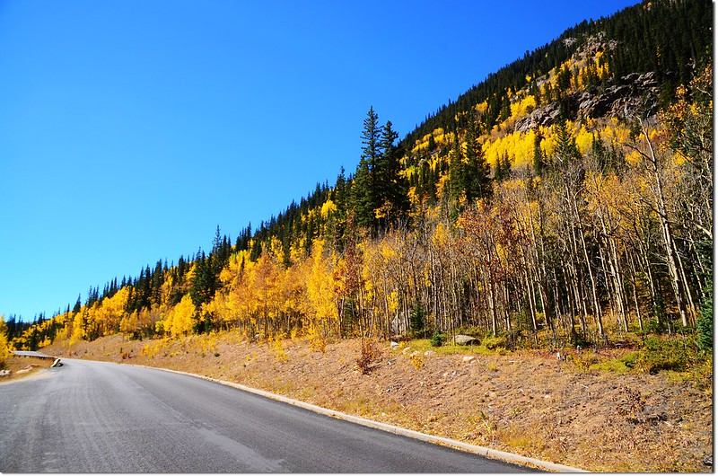 Fall colors at Guanella Pass, Colorado (41)