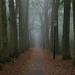 Foggy Path by romanboed