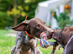 345 Obsessed with tug of war