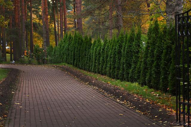 autumn_roads_08