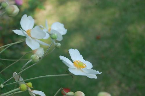 ★庭の秋★藤野から・・・