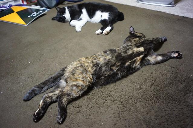 ホットカーペットが猫をダメにする^^;w