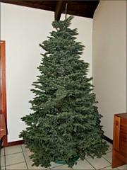 Christmas tree 2015, work in progress
