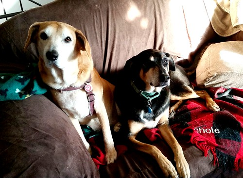 Sibling Love, Rescued Dogs