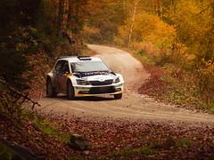 2015 - Skoda Rallye 3D