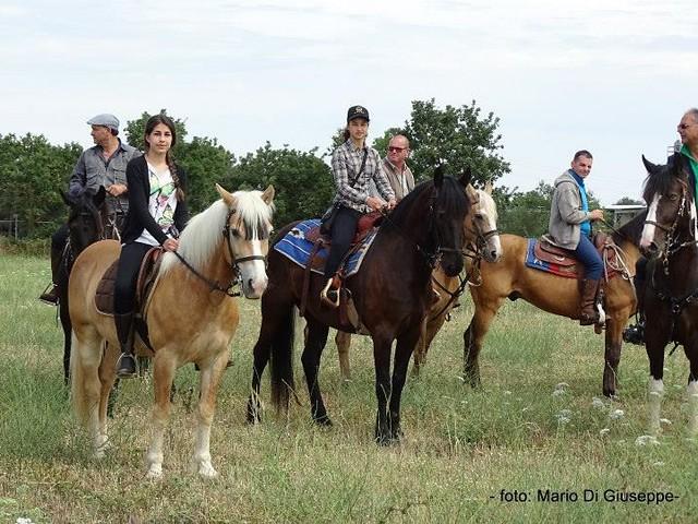 spirito libero spettacoli equestri