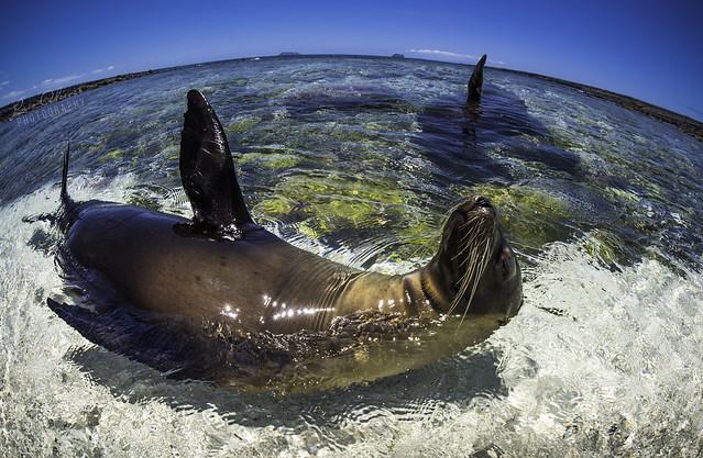 Galapagos Sea World!