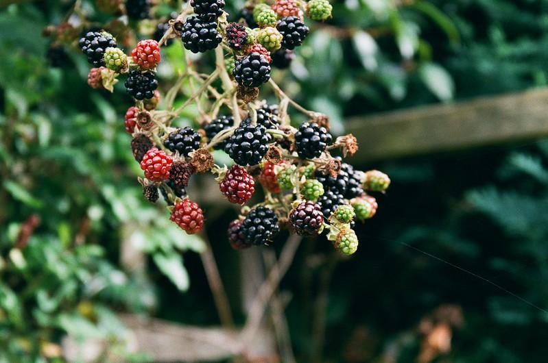 Berry Bokeh