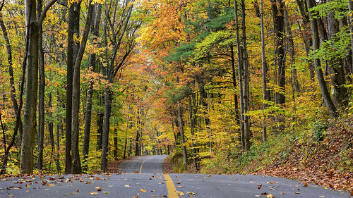 road travel backroad lane street twist twists turns hills vanishingpoint autumn autumnleaves autumnfoliage autumncolors fall fallfoliage fallcolors landscape vibrant colorful leaves trees woods forest country rural roadway photooftheday photography nikon nikond7200 nikonphotography nikkor nikkor1680mmf284eedvr pinegrove pa pennsylvania swopesvalleyroad saltydogphoto