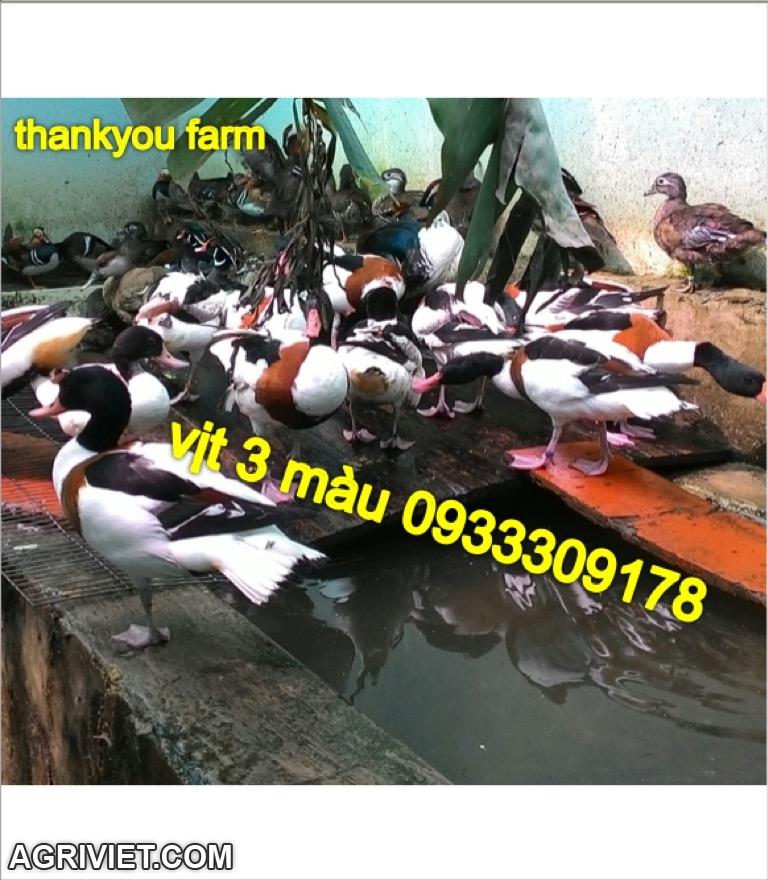 30711790502_1e61cb6964_o.jpg