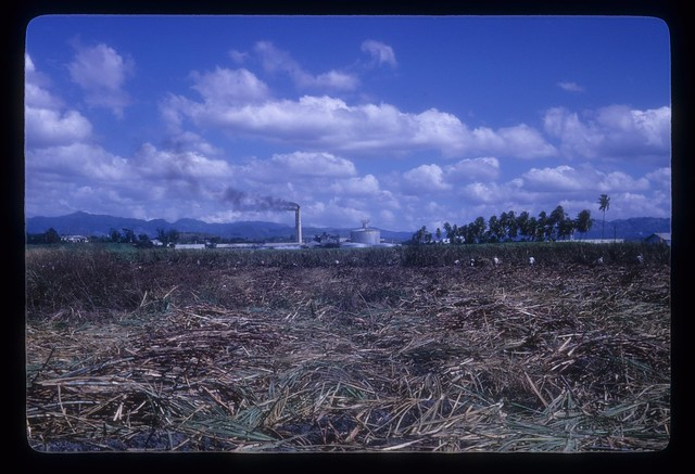 MS203--Men cutting sugarcane in field, smokestacks of sugar central in distance