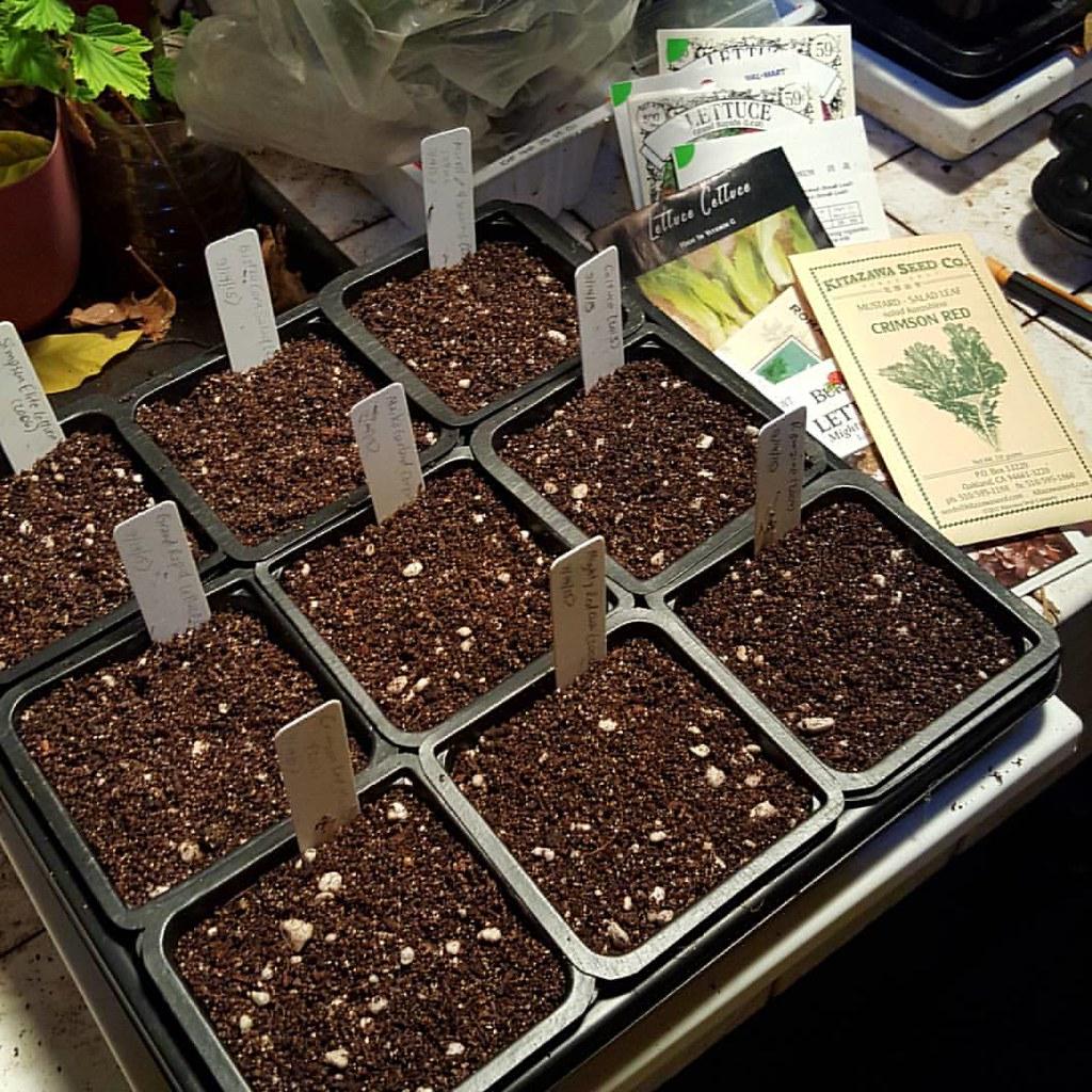 Salad Green seeds planted.