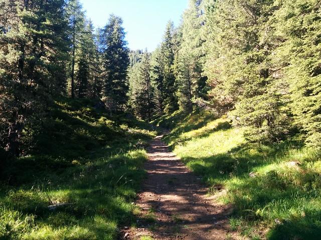 Gemütlicher Aufstieg durch den Wald