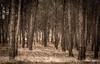 El bosque by adrivallekas