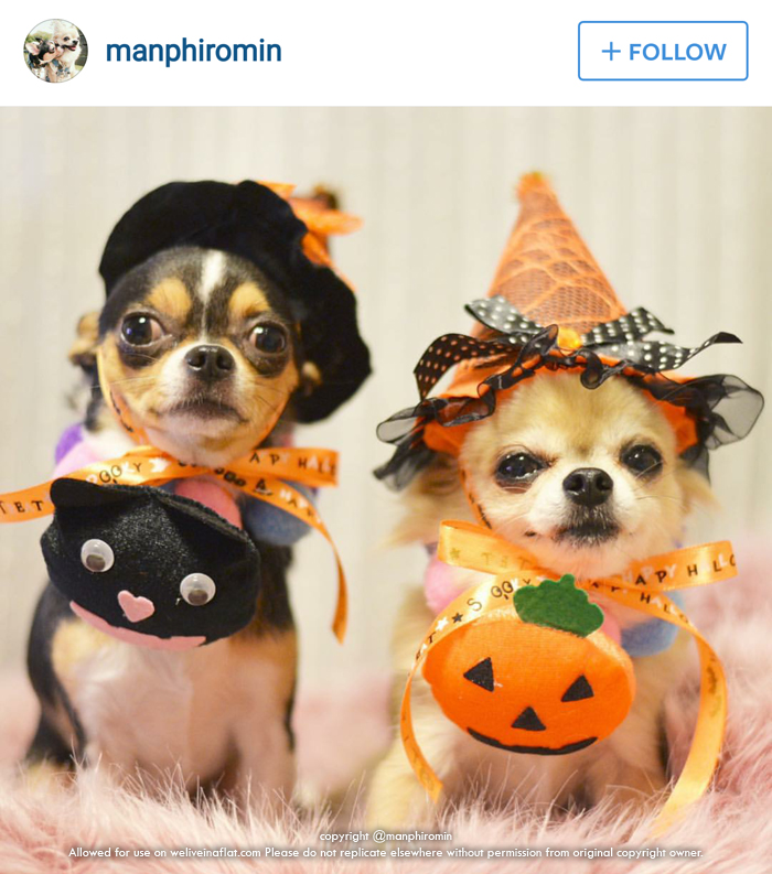 10 cute #DogsofInstagram accounts demonstrate 10 cute ways to dress both big and small dogs this Halloween ;) & Whou0027s not scary? These 10 cute Halloween dogs in costume! - We live ...