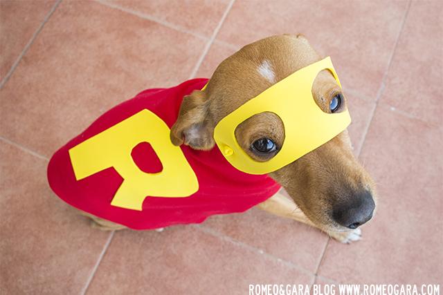 Disfraz de superhéroe para perro