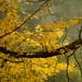 yellow by pat.netwalk