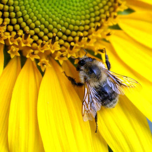 Flower and bee III