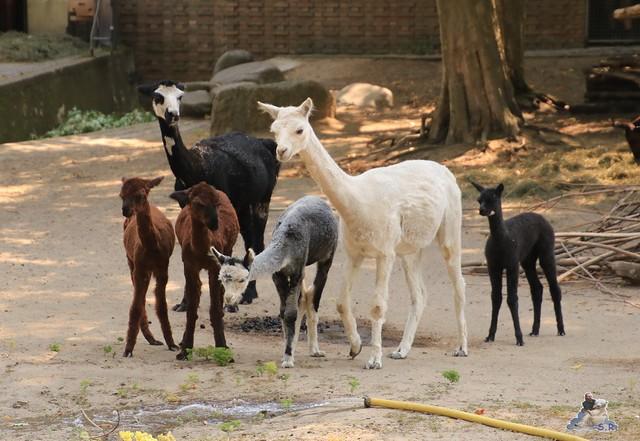 Zoo Berlin 14.08.2015  04