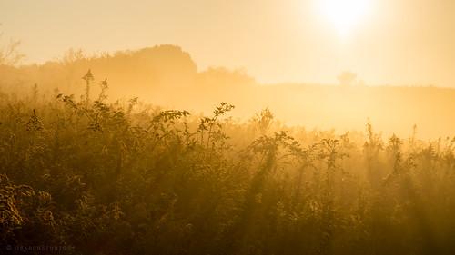 morning autumn sunlight mist fall nature beautiful field misty fog rural sunrise outdoors amazing pittsburgh pentax pennsylvania foggy goldenrod peaceful calm pa sunbeam sunray northpark fa77 k5ii pentaxk5ii
