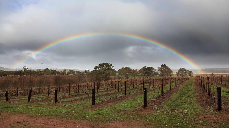 Rainbow over vineyards