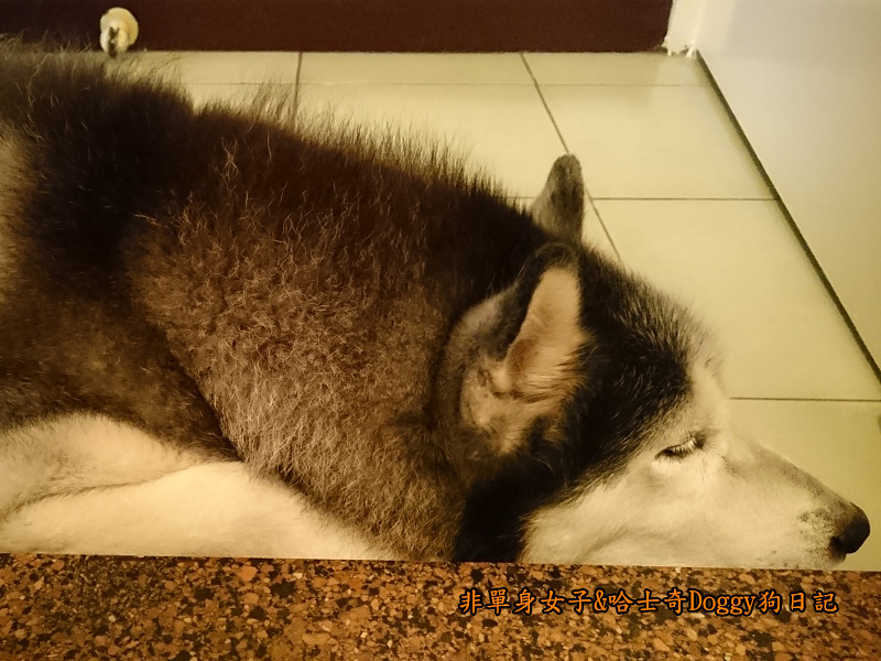 Doggy颱風14