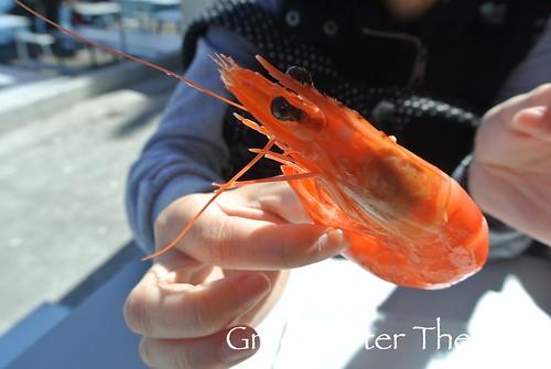 150908c Sydney Seafood Market _55