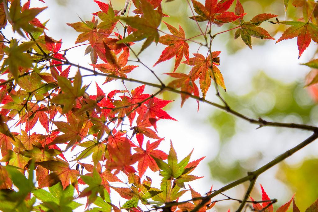 2015-11-11 武蔵野公園 001-2