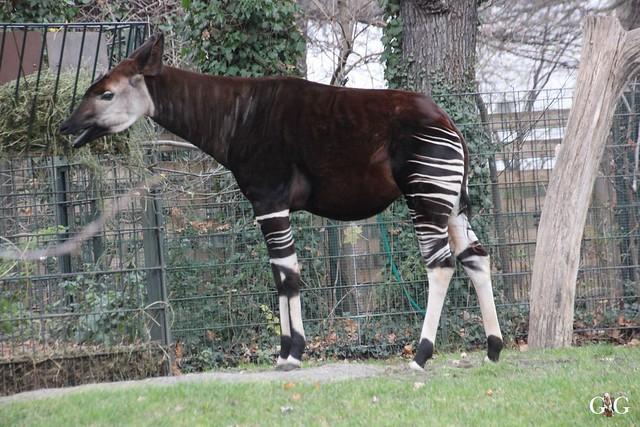 Besuch im Berliner Zoo 06.12.201564