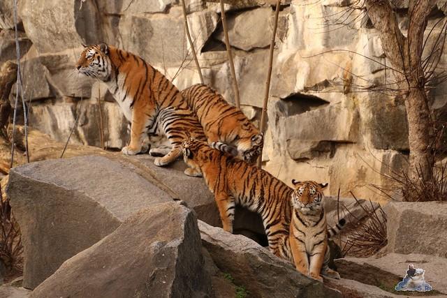 Tierpark Berlin 25.12.2051   73