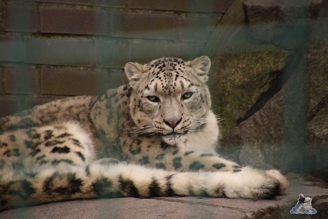 Tierpark Berlin 25.12.2051   98