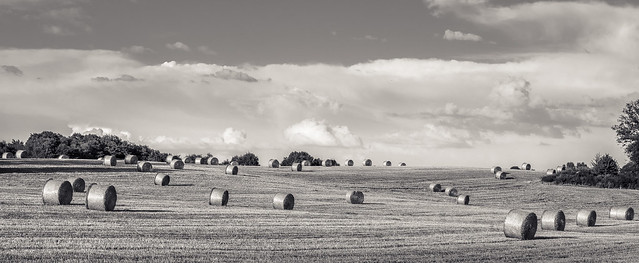 Straw bales field (B&W)