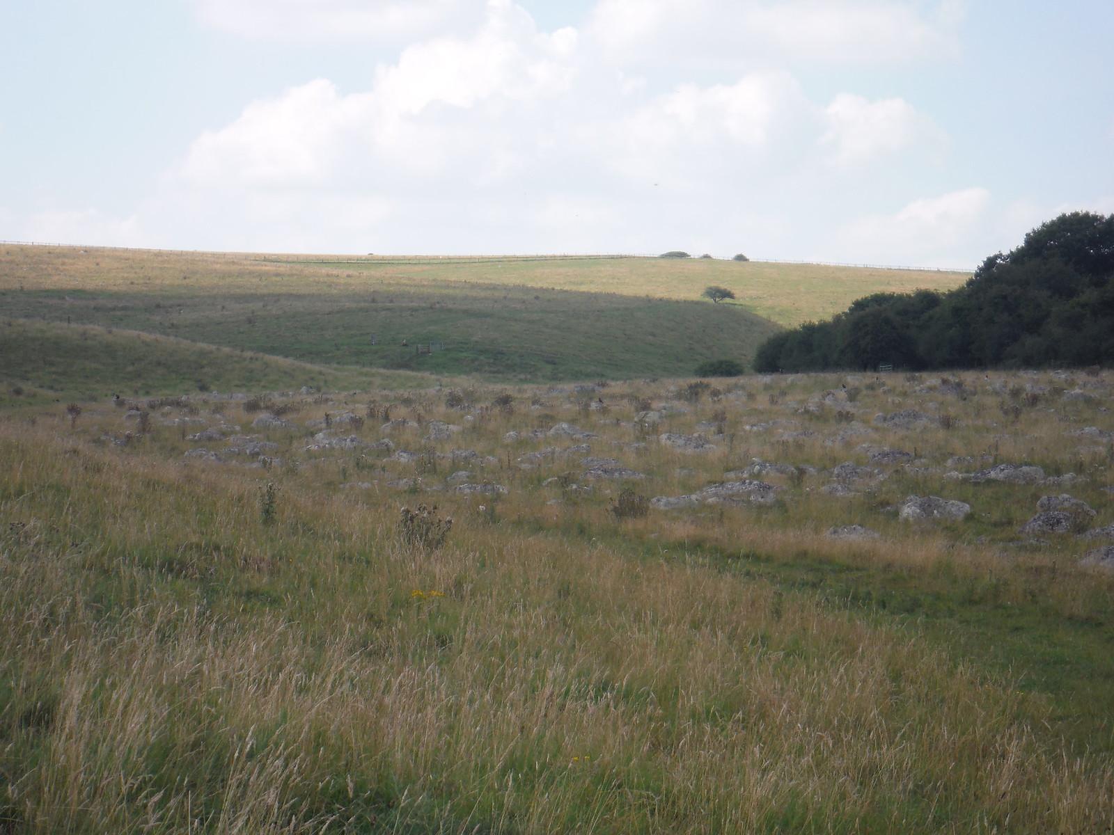 Fyfield Down Sarsen Stone Field, towards Overton Down SWC Walk 255 Pewsey or Marlborough Circular via Avebury